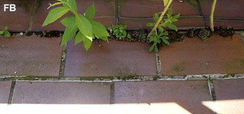 Frage Antwort Balkonsanierung Terrassensanierung
